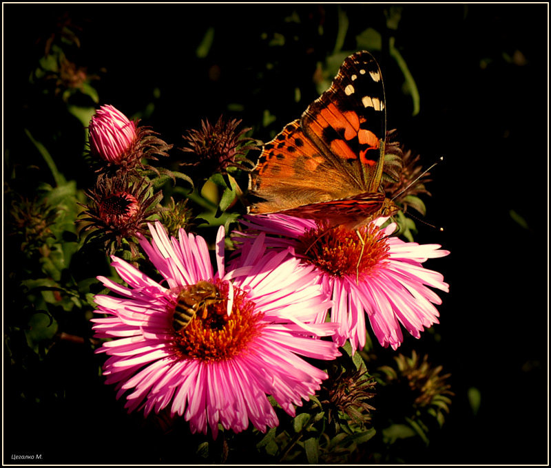Бабочка - Михаил Цегалко