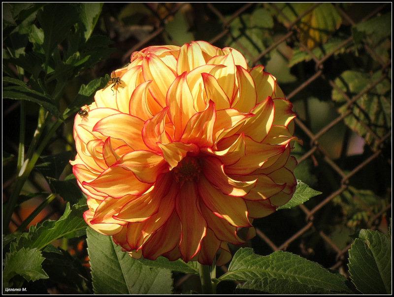 Цветок - Михаил Цегалко