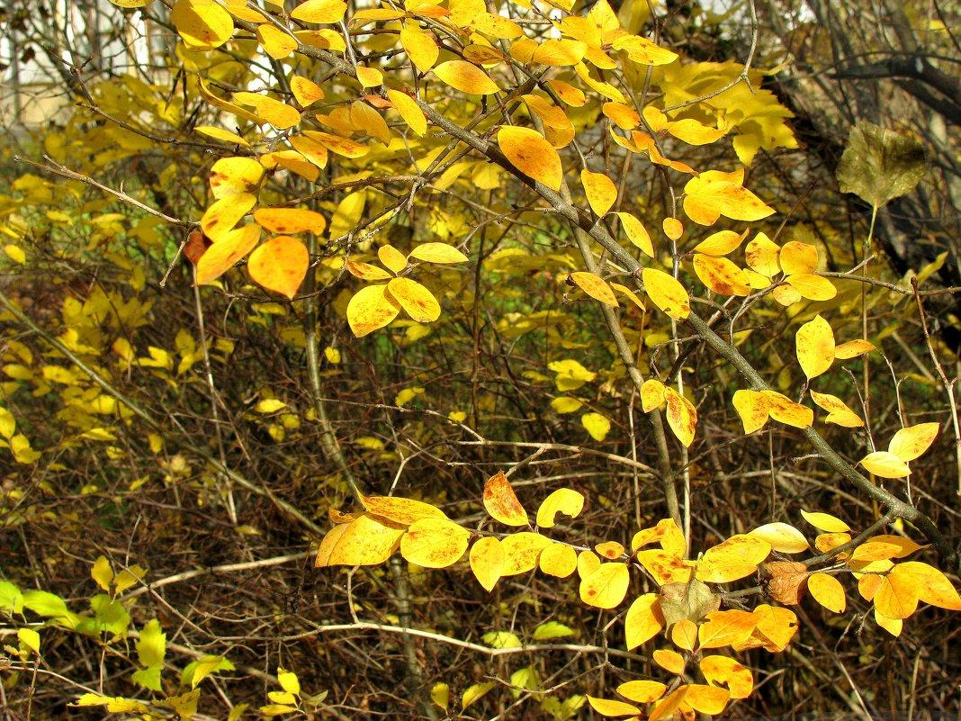Осеннее - Наталья