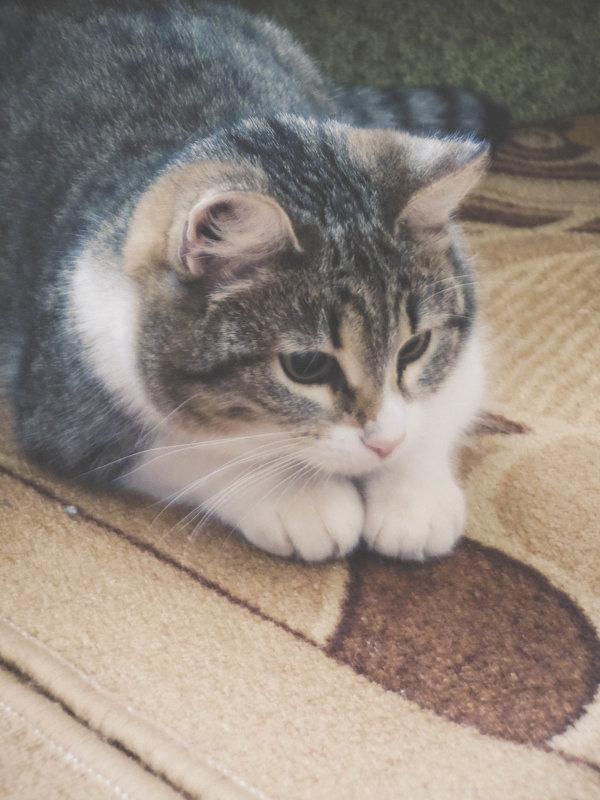 кошка - Александра Тетерина