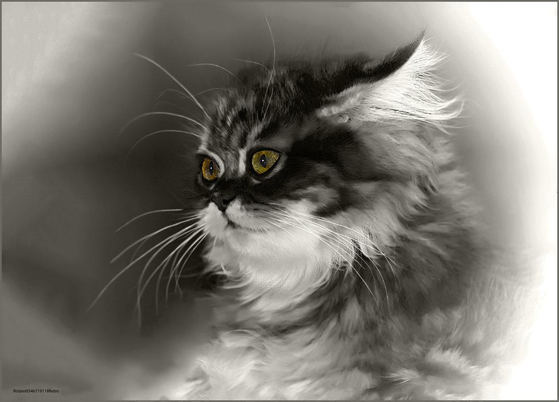 Шиншилла-3-из серии Кошки очарование мое! - Shmual Hava Retro