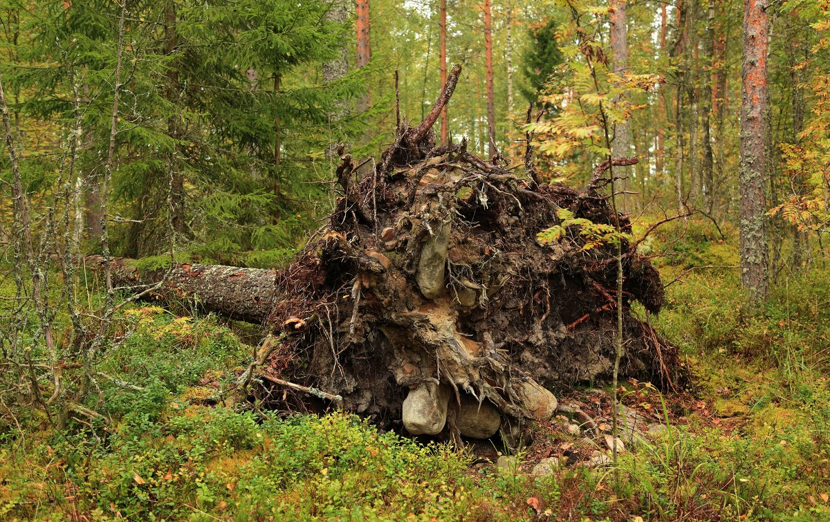 И на камнях растут деревья ... - Александр Алексеенко