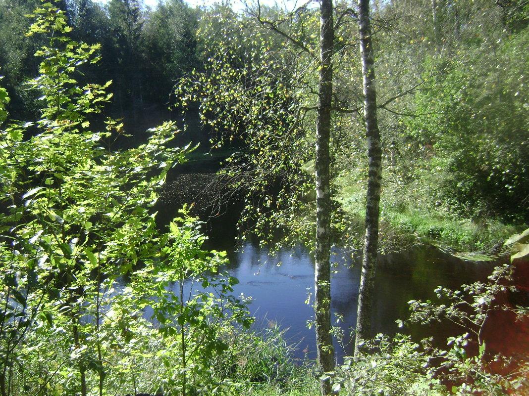 У лесной реки - Марина Домосилецкая