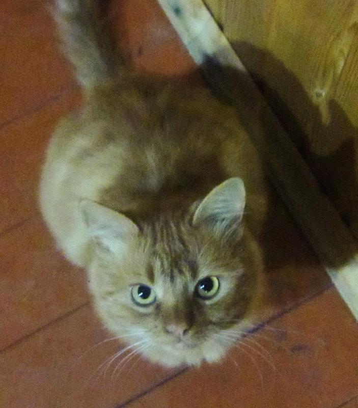 Негодование кошки - татьяна