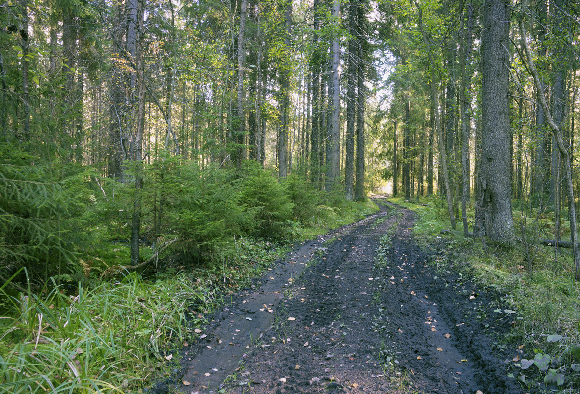 Осенний лес - Aнна Зарубина