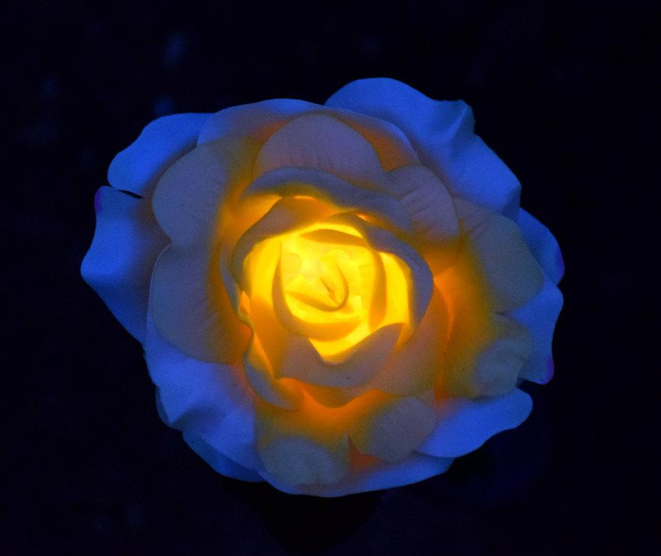 Роза садовая, пластиковая - 2 - gegMapuXyaH