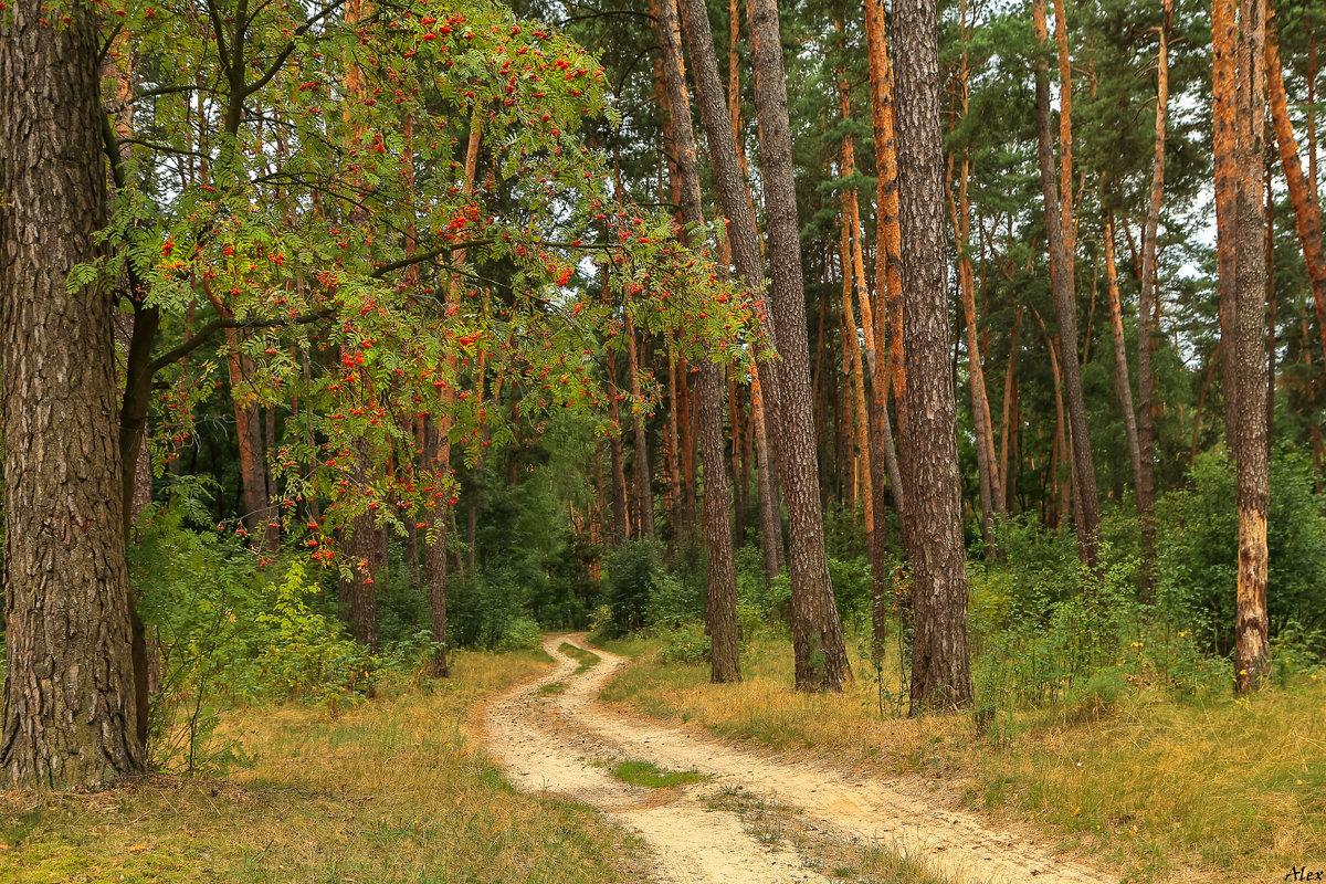 Лесная дорога в осень... - Alex Alex