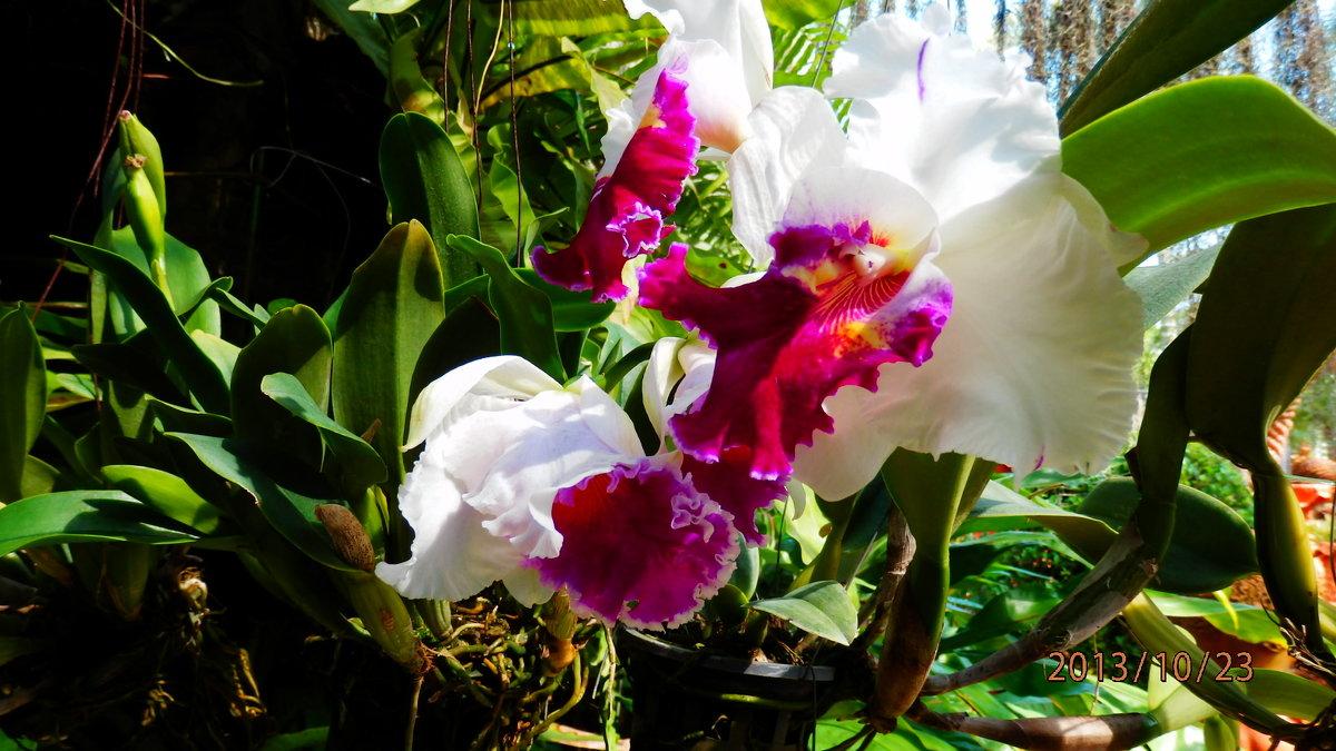 цветы - Таня