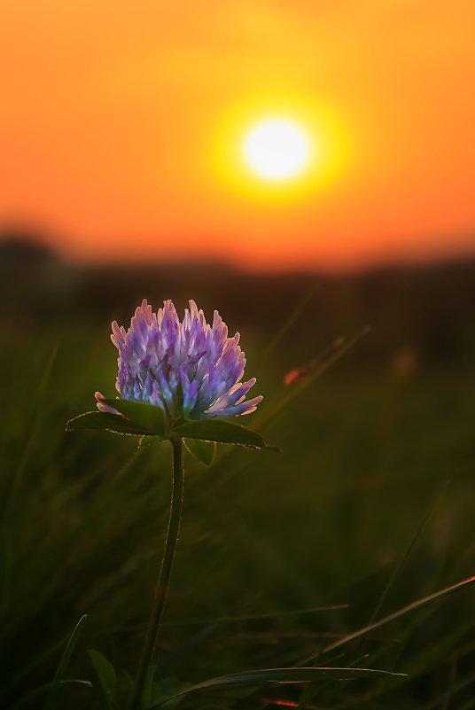 На закате..... лета..... - Julia Martinkova