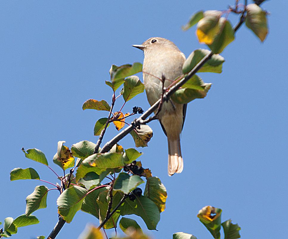 Птичка-невеличка - Анатолий Иргл
