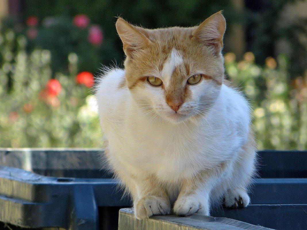 В глазах кота – душа кота… - Татьяна Смоляниченко