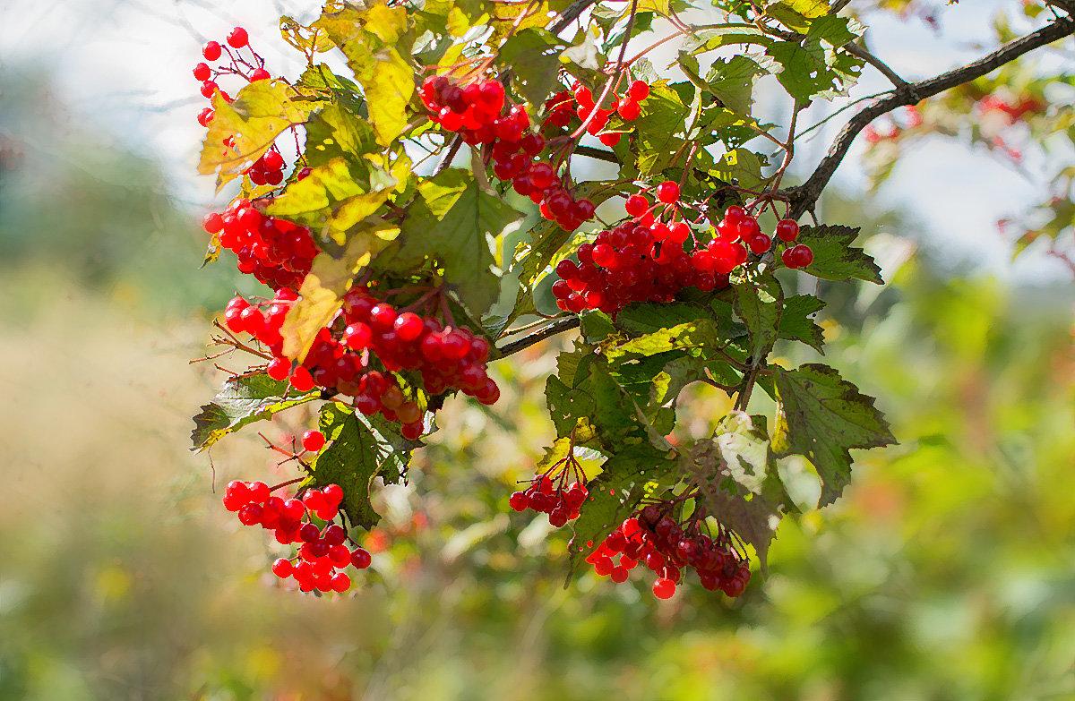 Осень - Людмила Фил
