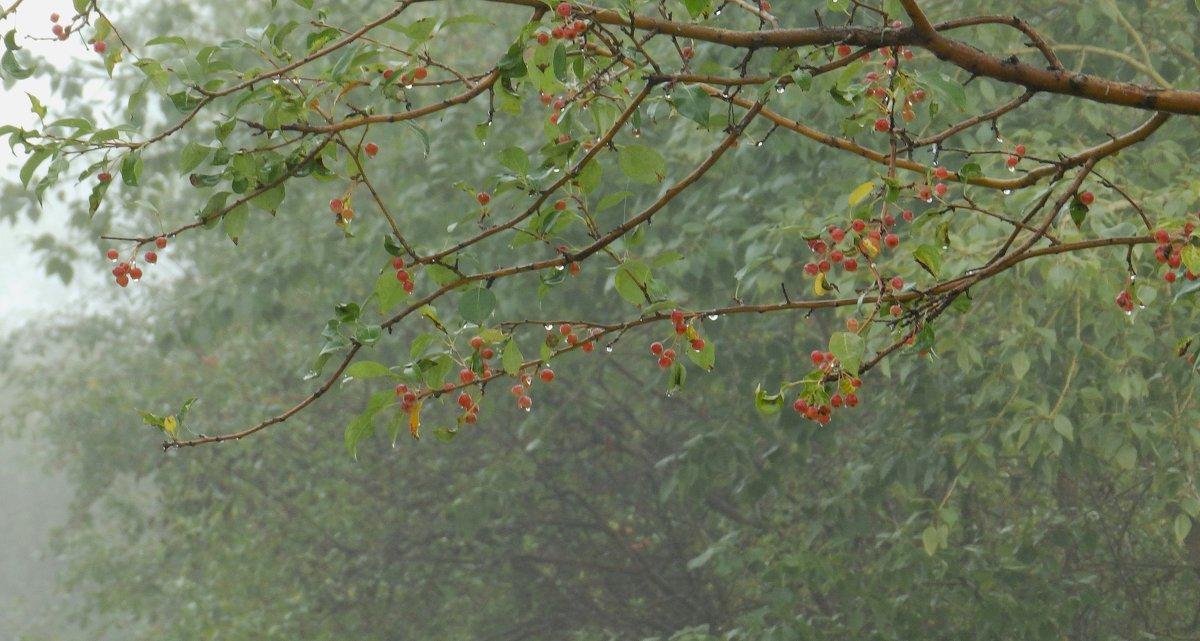 осенний дождь - Анна