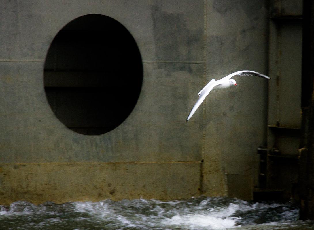 В камере шлюза           Чёрные дыры  Белые птицы - Алексей (АСкет) Степанов