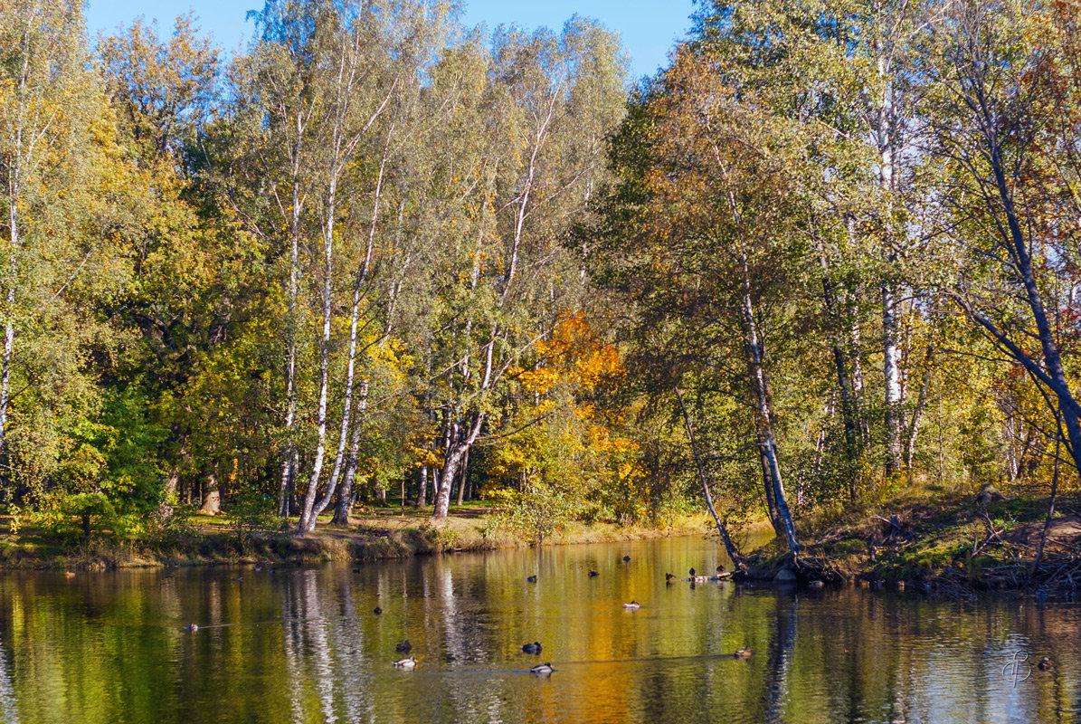 Осень в старом парке 2 - Виталий