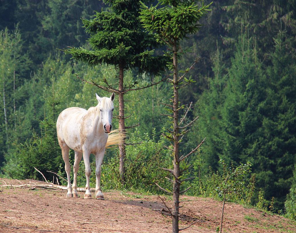 портрет на фоне леса - Анна -