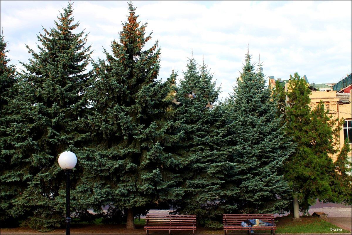 Сон в парке на лавочке - Татьяна Пальчикова