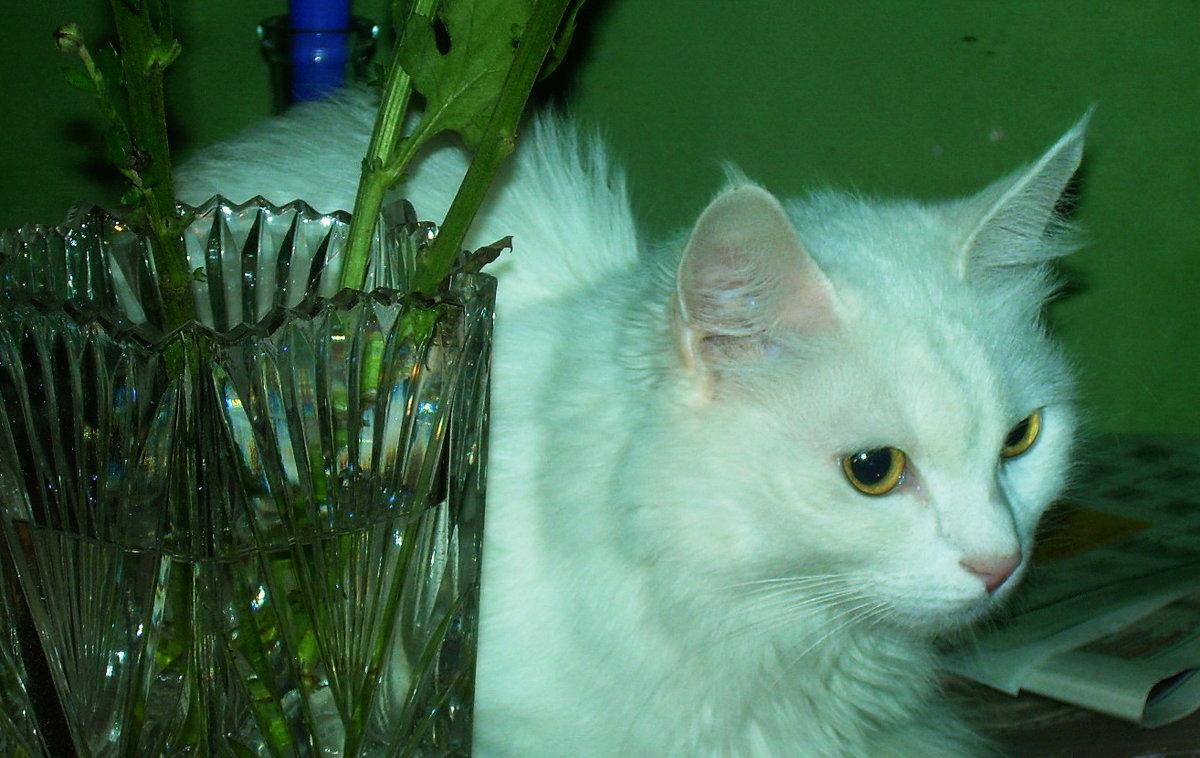 Кошка Беляна. Где хочу, там и сижу - татьяна