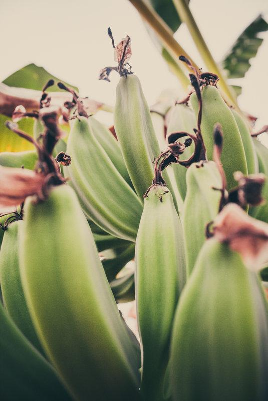 Банананананки - Yana Fizazi