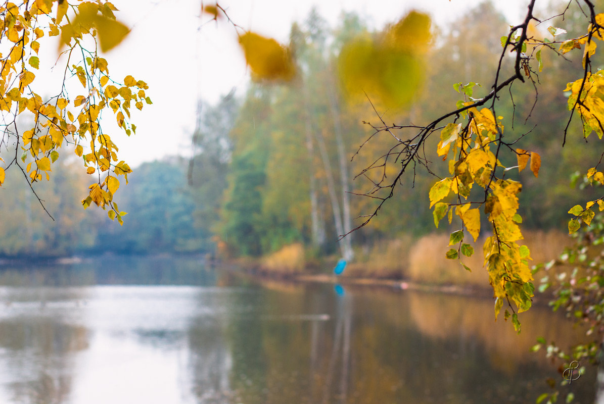 Осень в старом парке 5 - Виталий