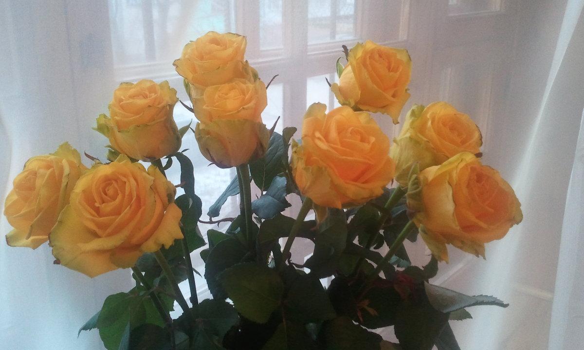 Желтые розы - марина ковшова