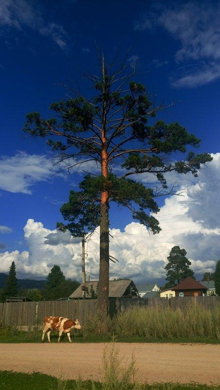 Дерево в деревне - Елена Бушуева