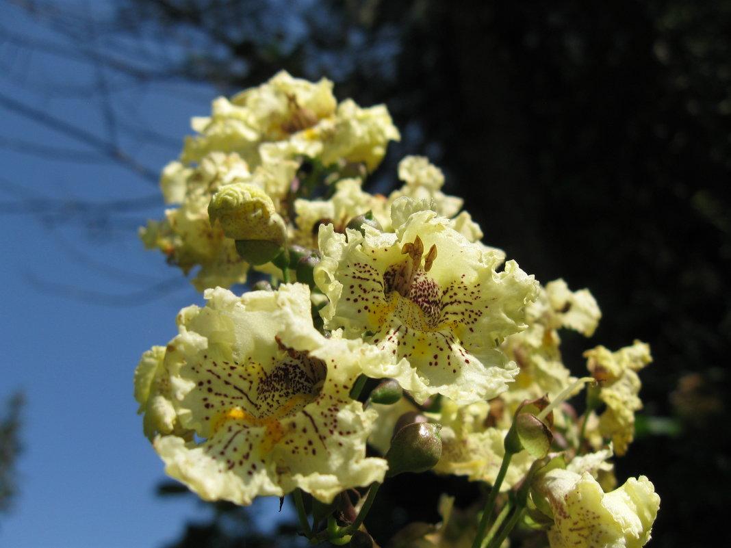 Флора Армении - Volodya Grigoryan