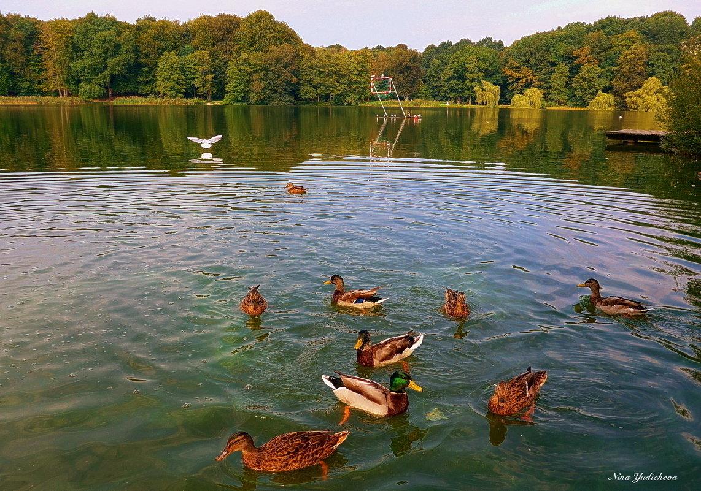 Утки на озере - Nina Yudicheva