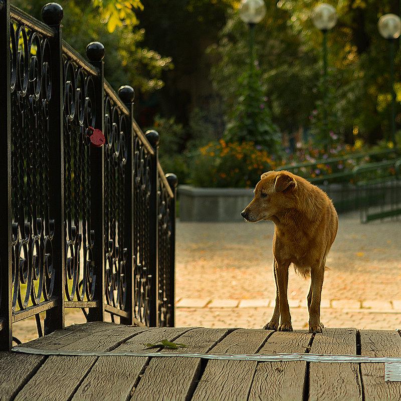 собака - Валерий Чернов