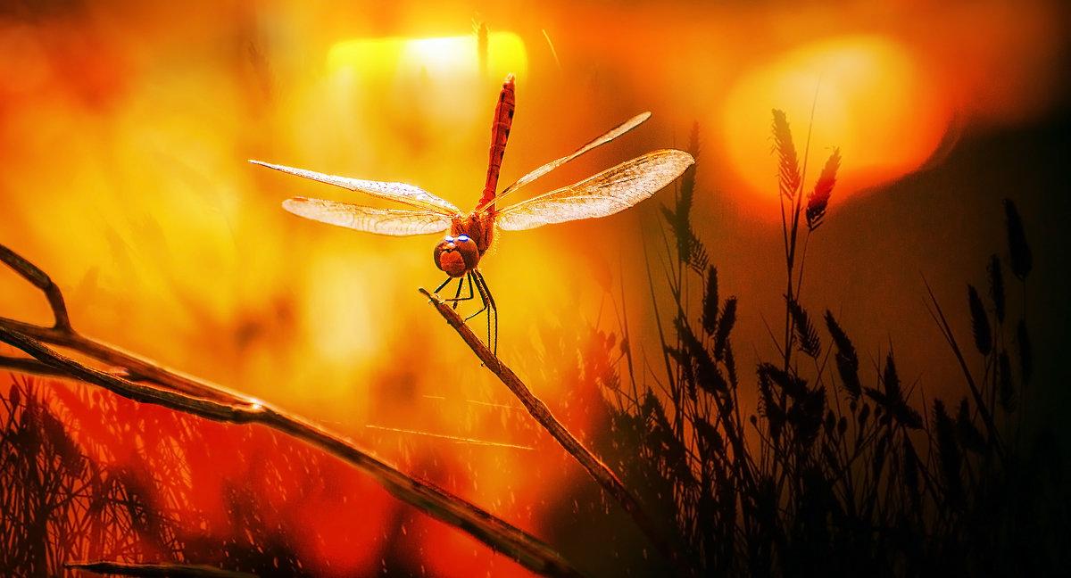 ..хвост по ветру..., готова к опасностям, приключениям и безрассудству.. - Лилия .