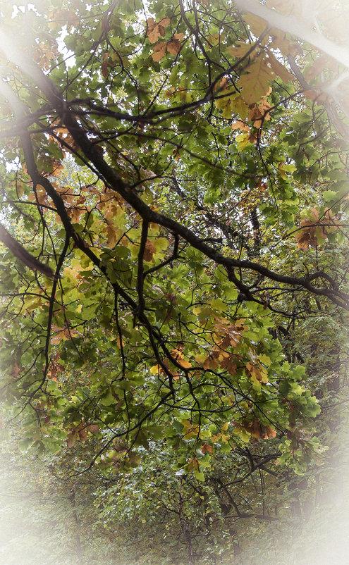 осень скоро - Олег