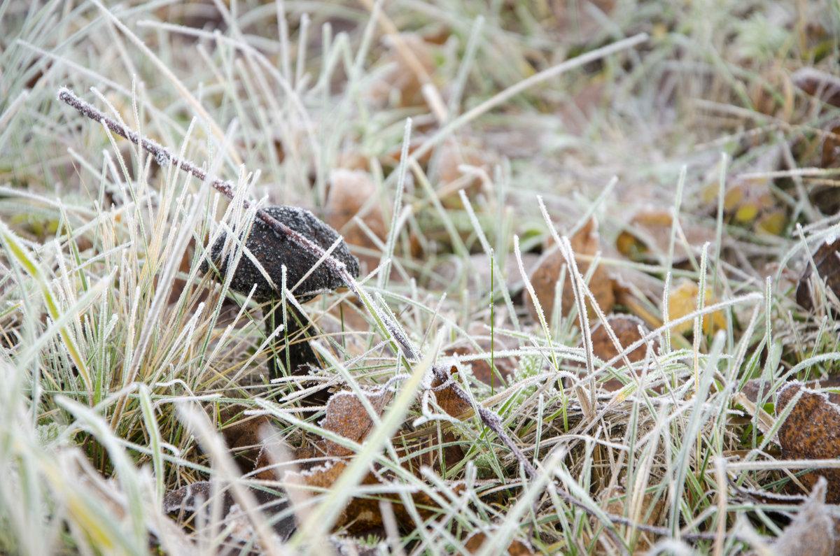 Белый иней, чёрный гриб - Денис Samuila