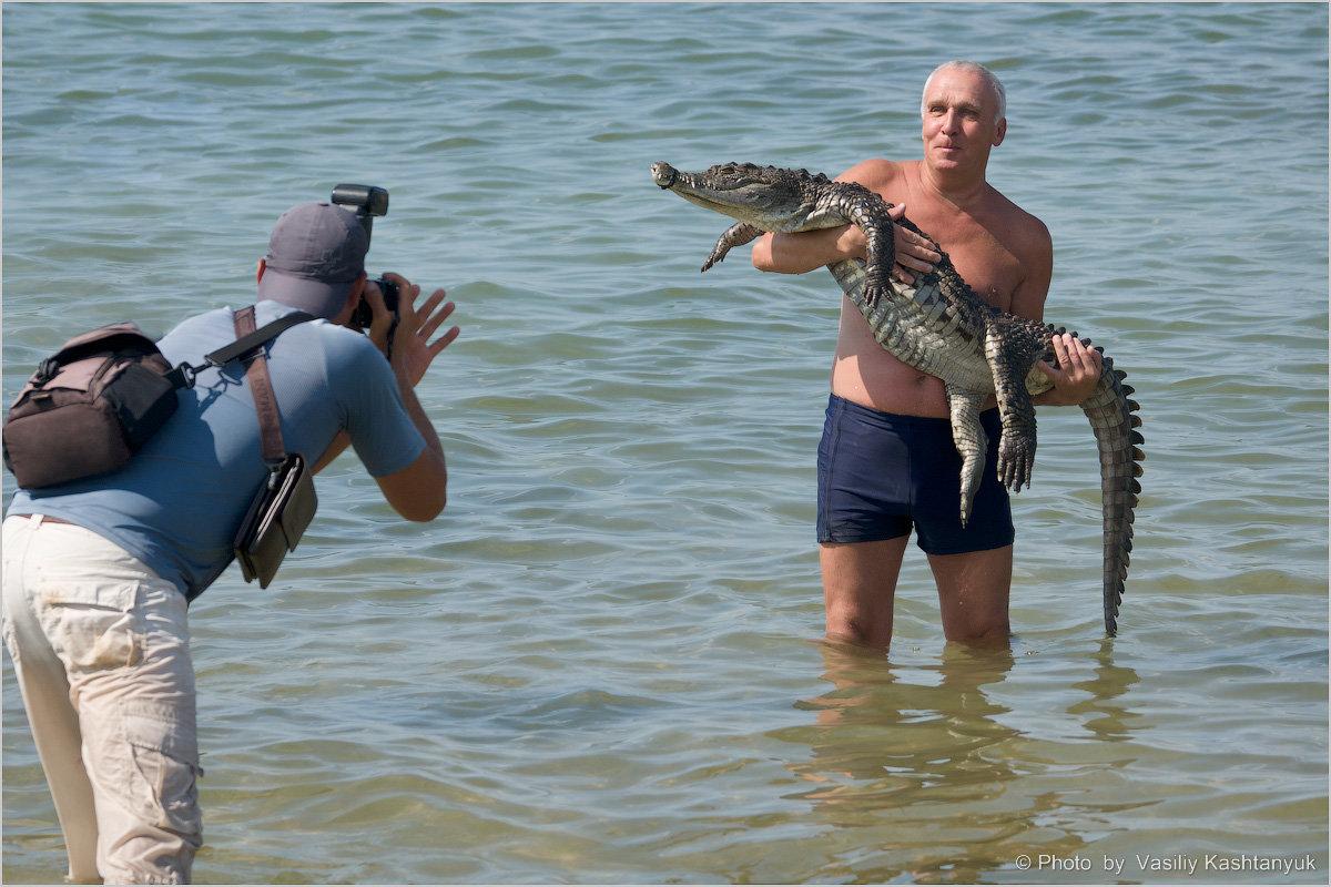 Убаюкать крокодила - Василий Каштанюк