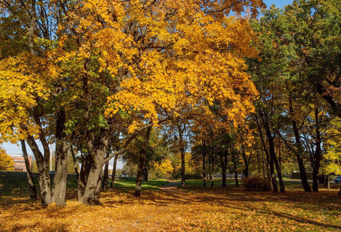 Осень в пригороде 5 - Виталий