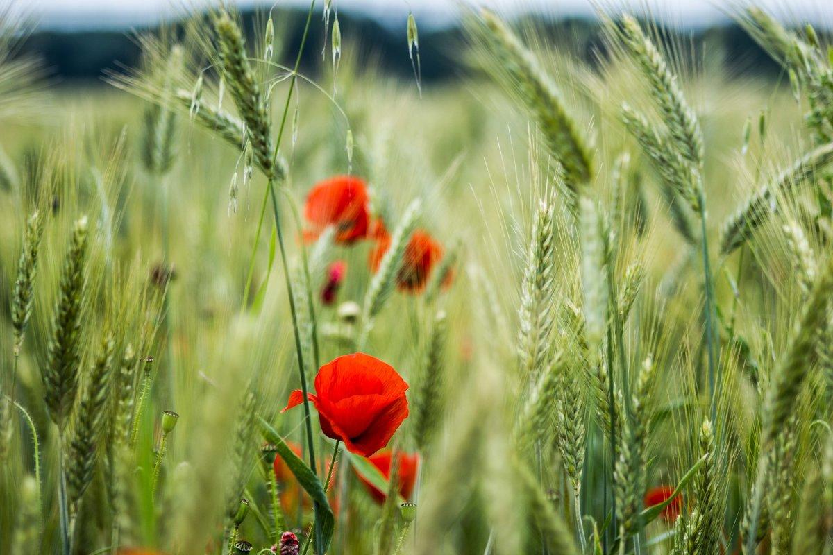 v pole - Anatol Stykan