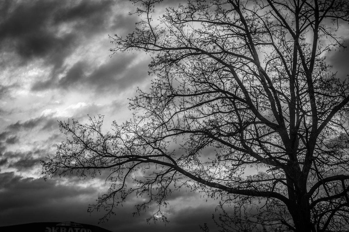 монохромное настроение - Ксения смирнова