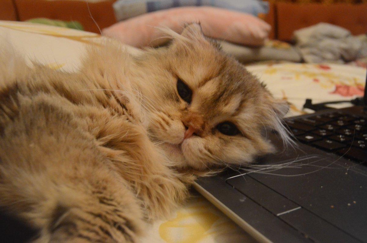 мой котя шрек - Аннушка Гущина