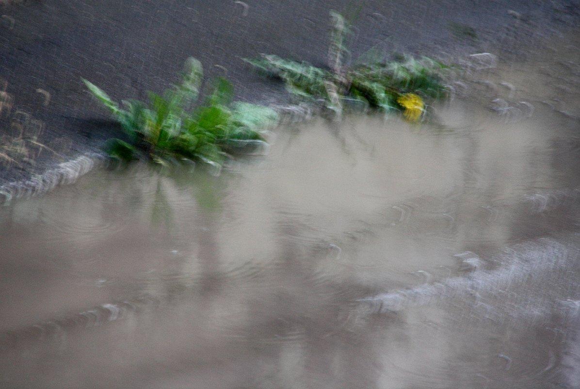 Дождливые  акварели.... - Валерия  Полещикова