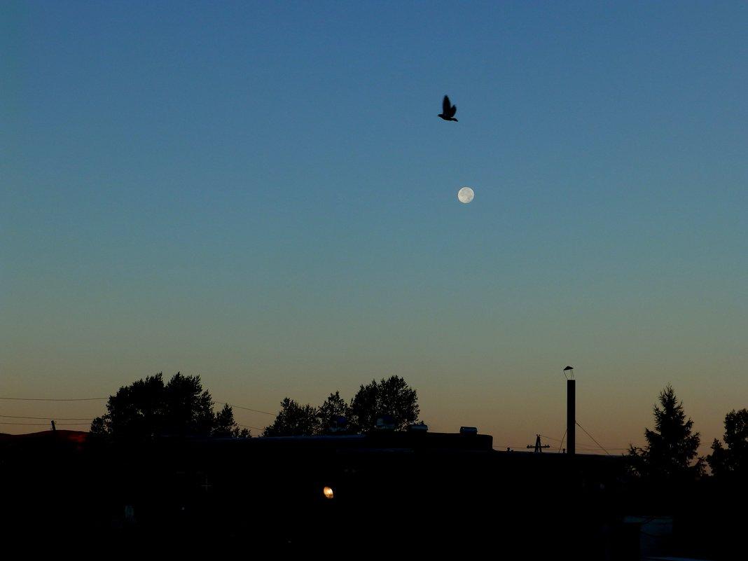 утро с луной - Анна