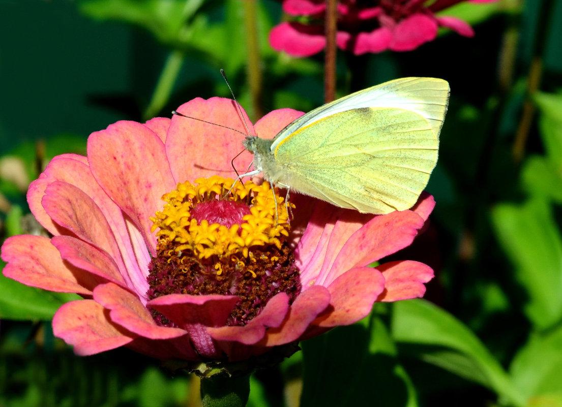 Бабочка ... - Марина Романова