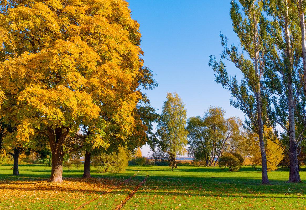 Осень на берегу Разлива - Виталий