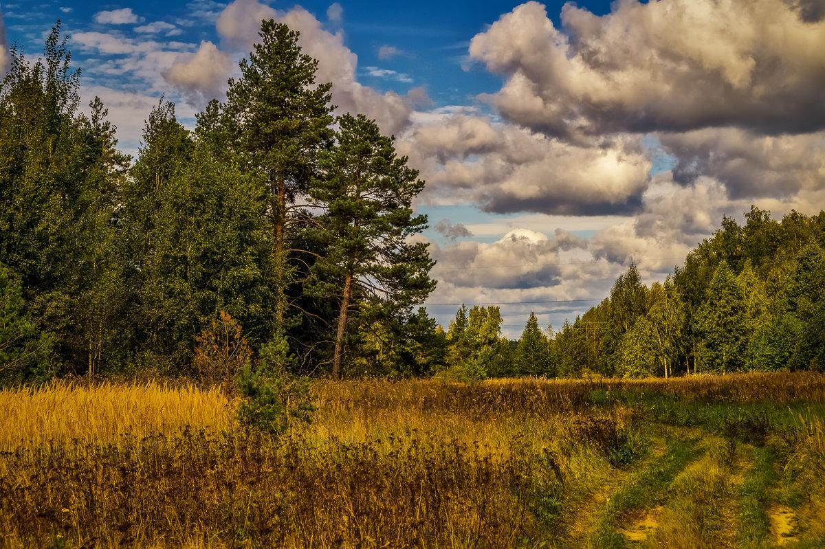 Дорога из леса - Андрей Дворников