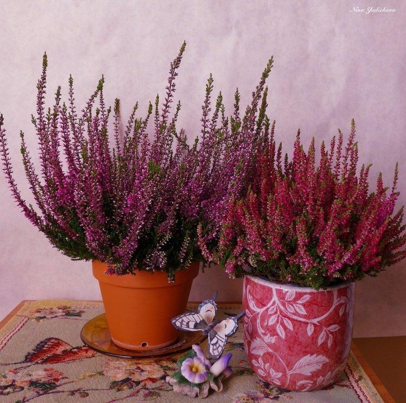 Когда цветёт вереск - Nina Yudicheva