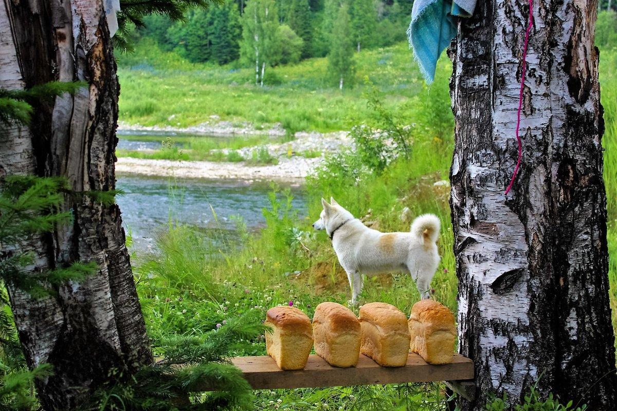 Просушка хлеба - Сергей Чиняев
