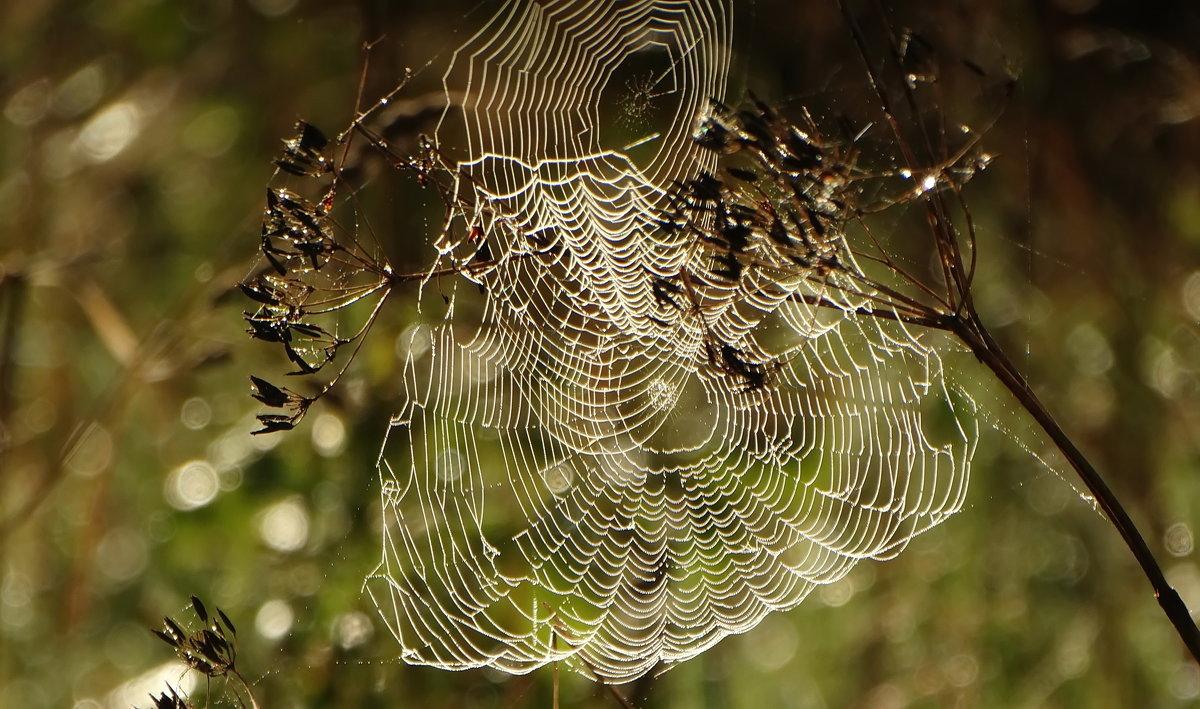 Травянистые паутинки. - Владимир Гилясев