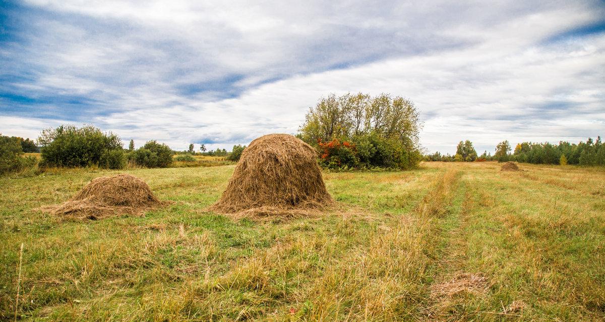 Осень на покосе... - игорь козельцев