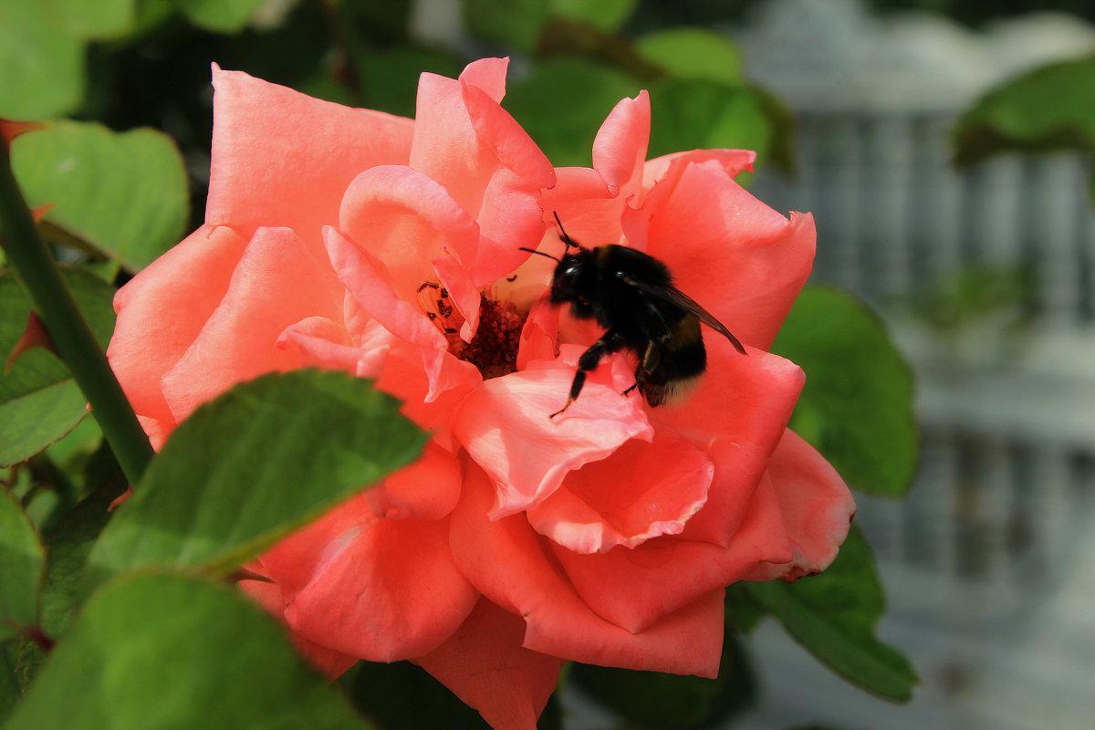 Пчелка на цветке - Nataliya Oleinik