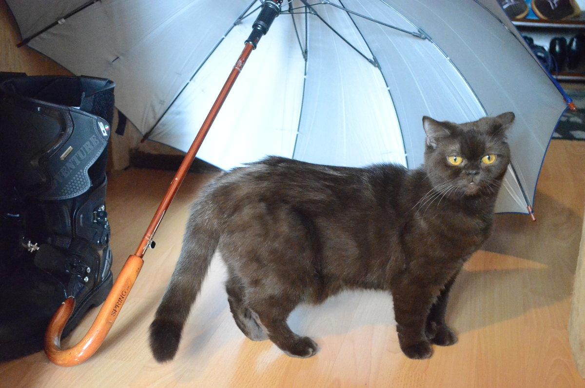 модель под зонтиком - Ольга