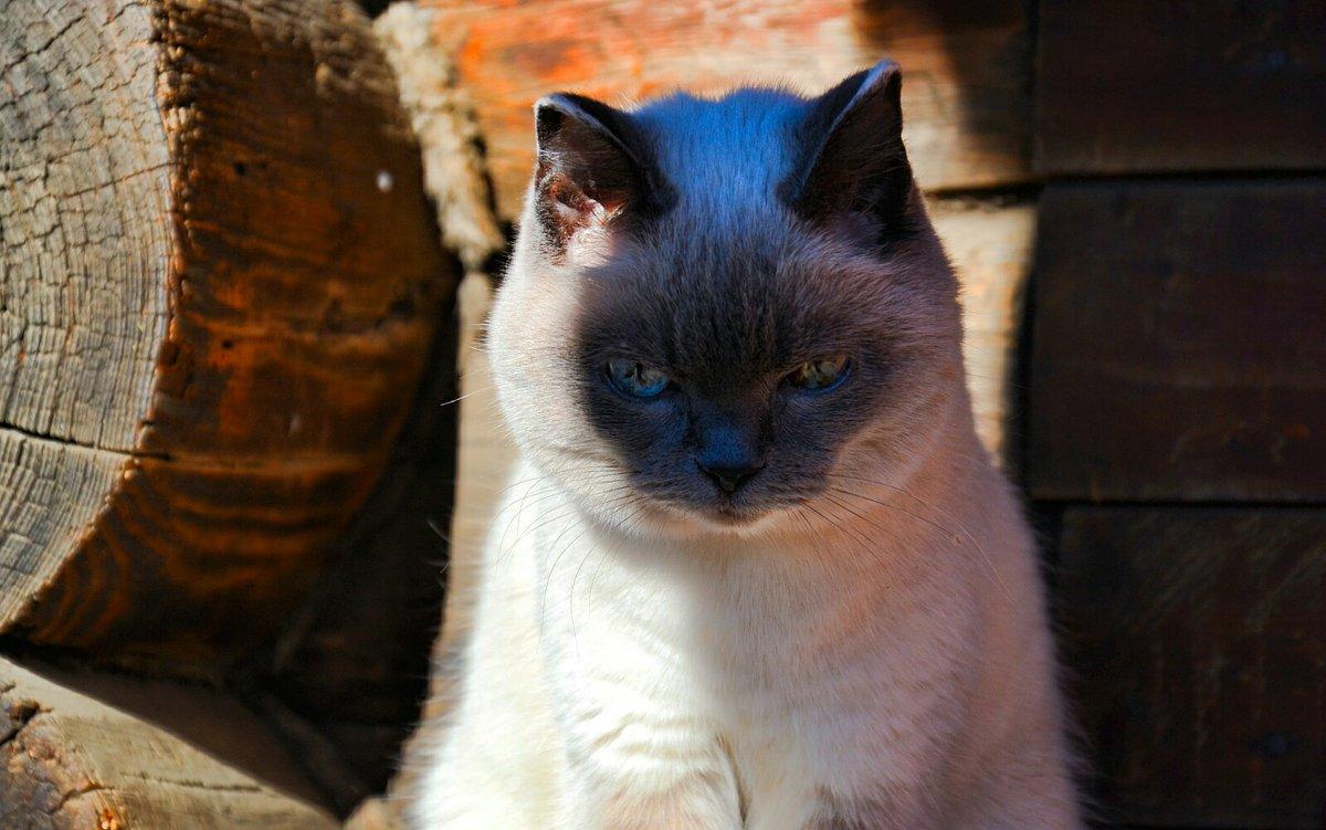 Кошачья грусть - Милешкин Владимир Алексеевич