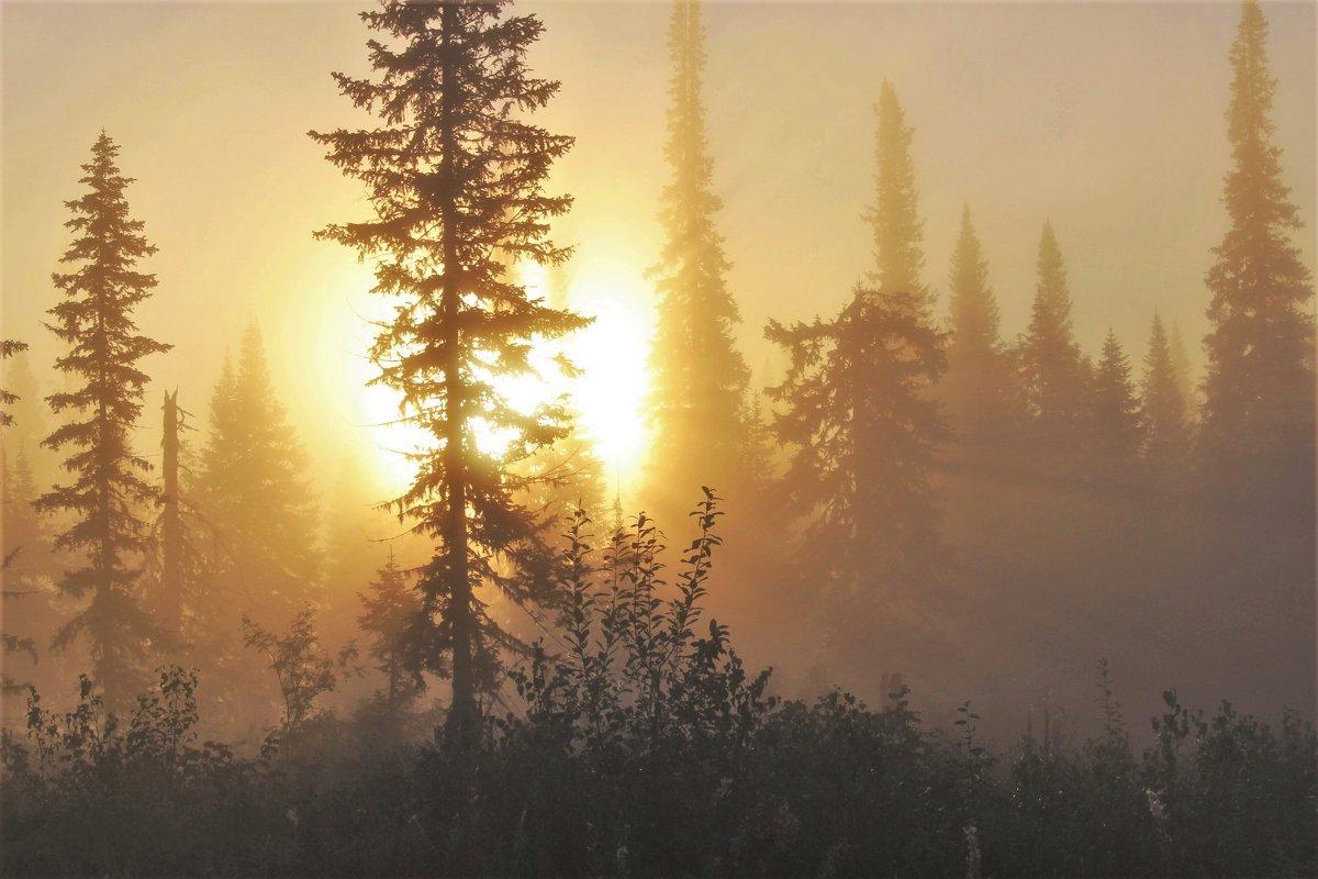 Солнце выкатилось - Сергей Чиняев